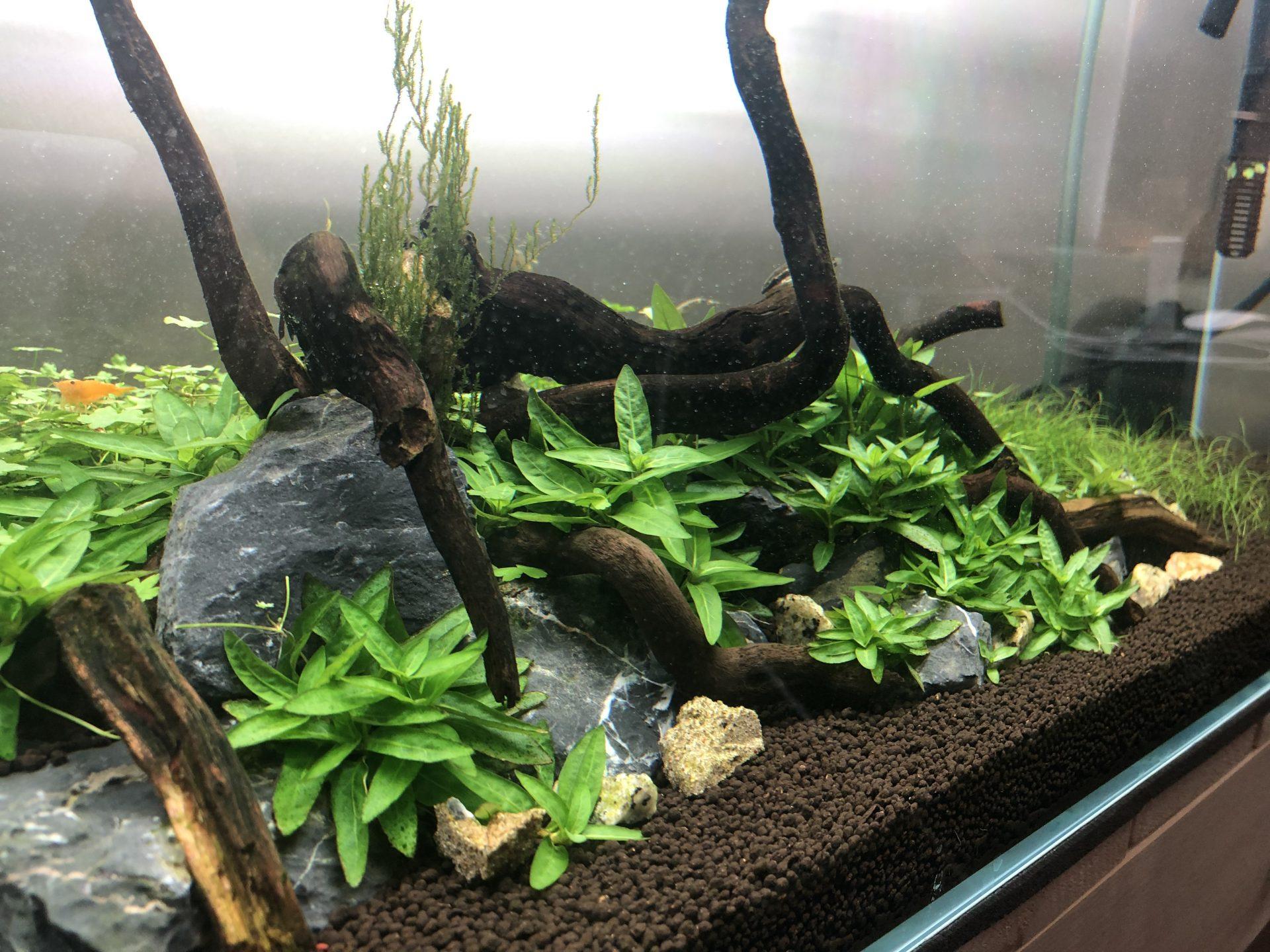 Aquarium DIY CO2 Kit: Citric Acid/Vinegar and Baking Soda – SWOG