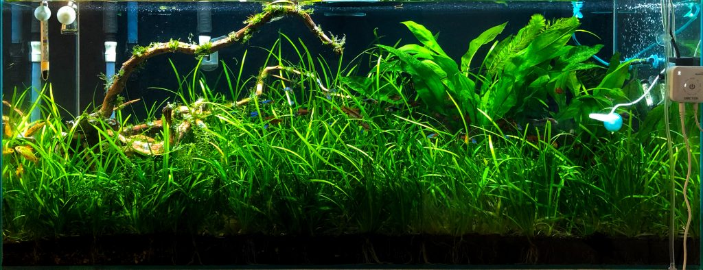 75 gallon Grass Jungle