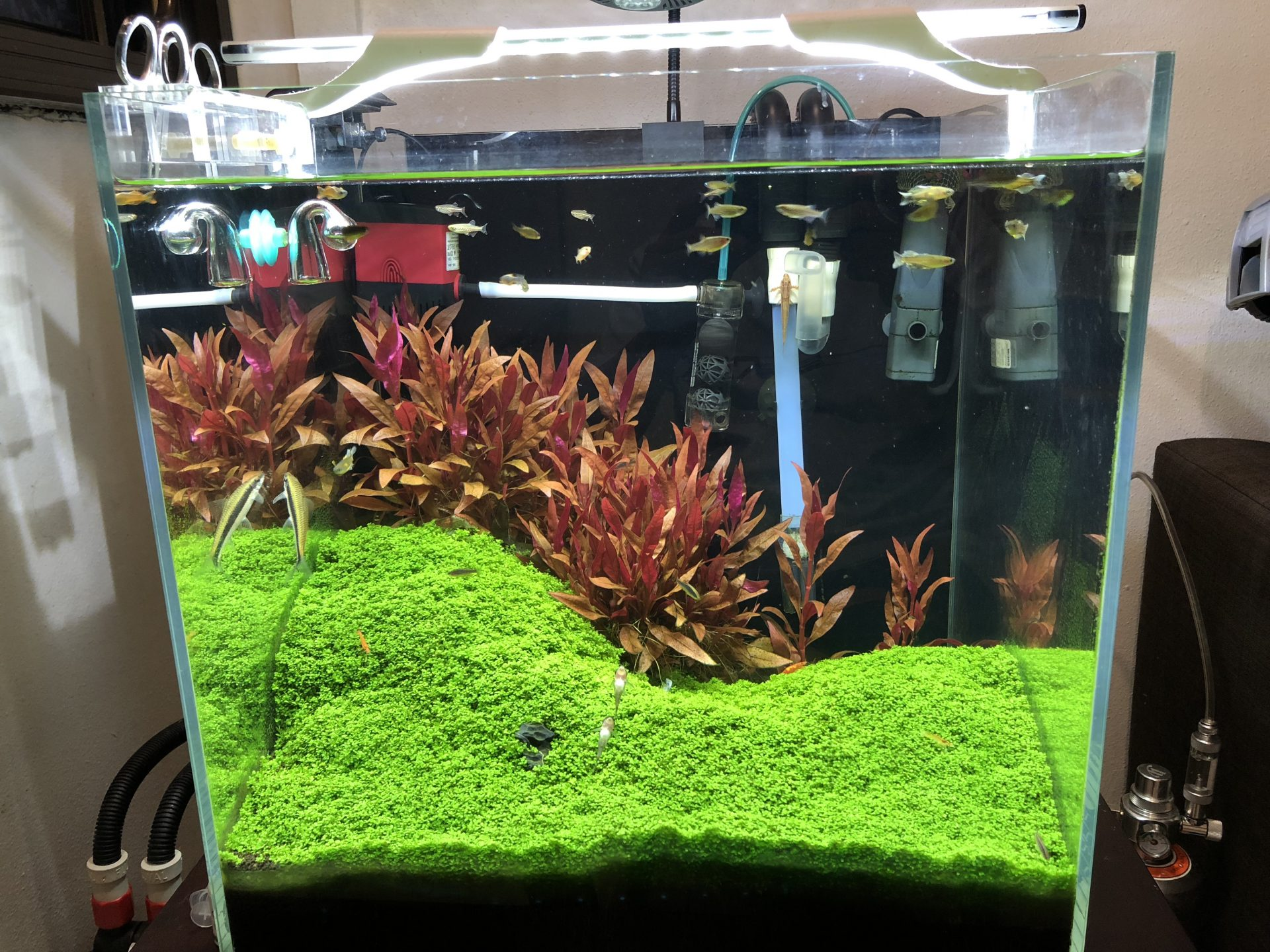 My Planted Tanks Using DIY CO2