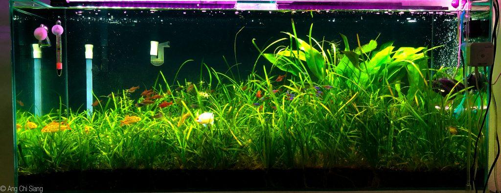 75 gallon grass jungle aquarium with DIY CO2.