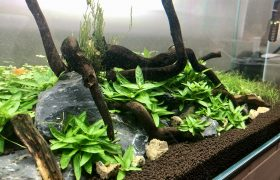 Should You Invest in a Low Iron Glass Aquarium Tank?